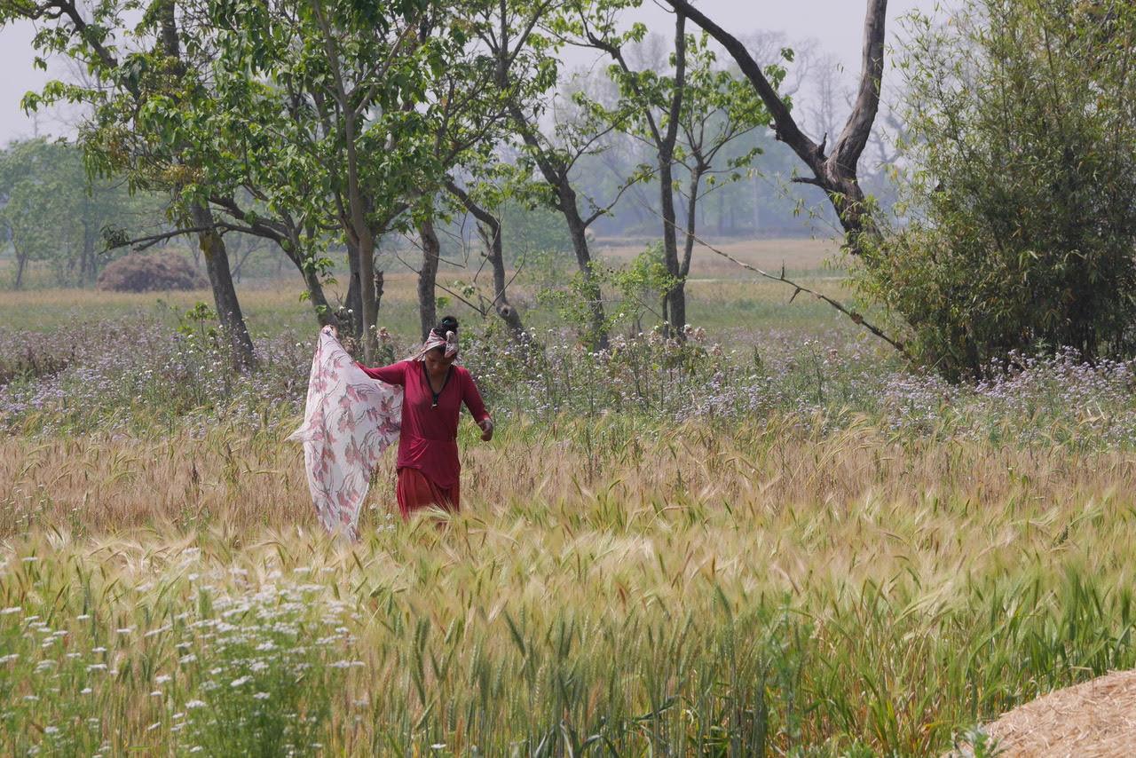 bardia jungle safari tharu woman working