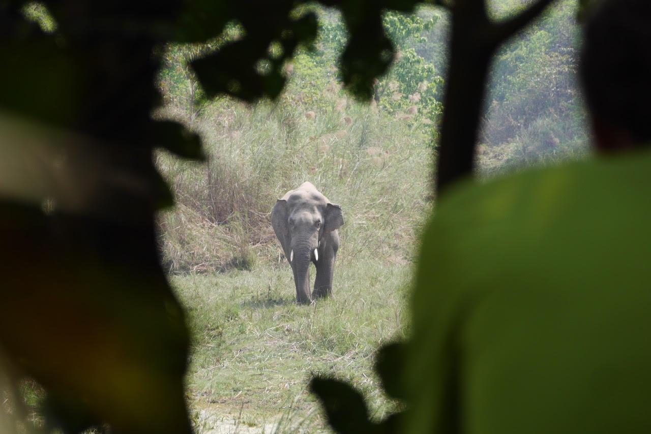 bardia jungle safari wild elephant